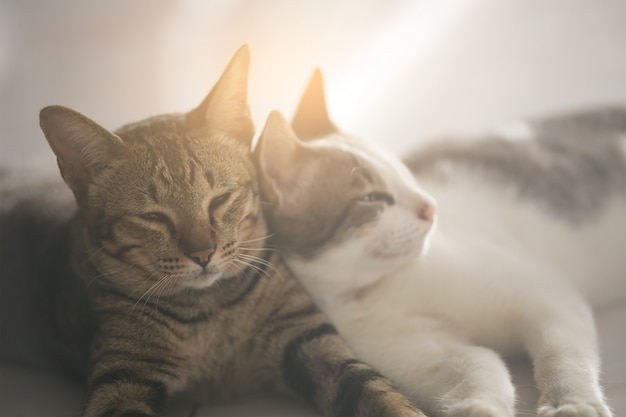 Cute cats are sleeping happily.