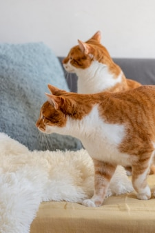 Cute cats on couch indoors