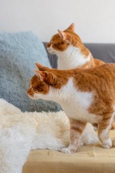 Милые кошки на диване в помещении