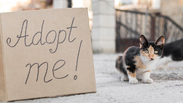 Cute cats outdoors with adopt me sign