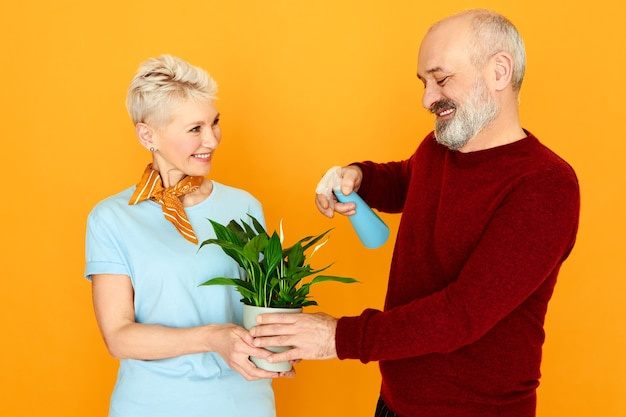 Cute charming elderly couple taking care of houseplant together. happy beautiful mature female holding pot flower while her bearded husband moisturizing its green leaves using spray bottle