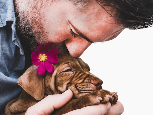 Cute, charming puppy and a bright flower