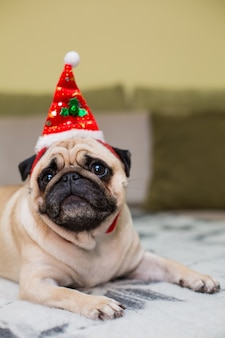 Cute christmas pug puppy dog wearing red santa hat