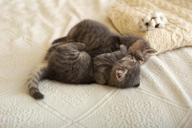 Милая пара влюбленных котят спят, обнимаются, целуются, играют на белом пледе кровати