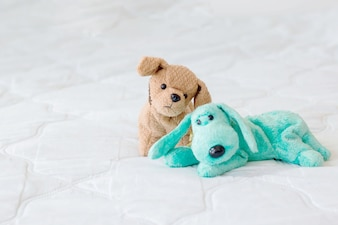 Cute couple puppy on white background