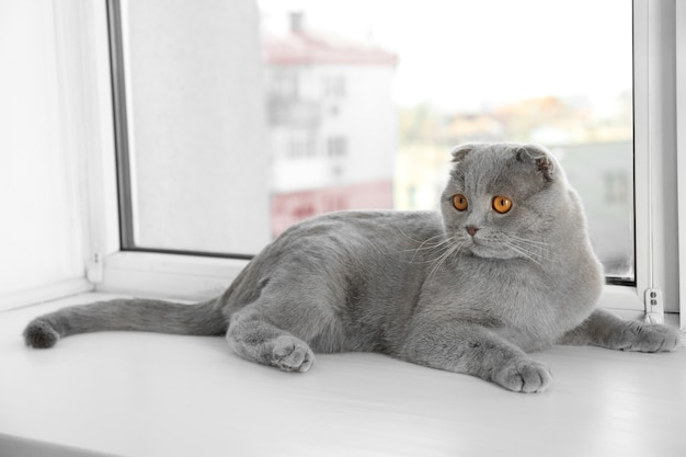 Cute curious cat resting on window sill at home
