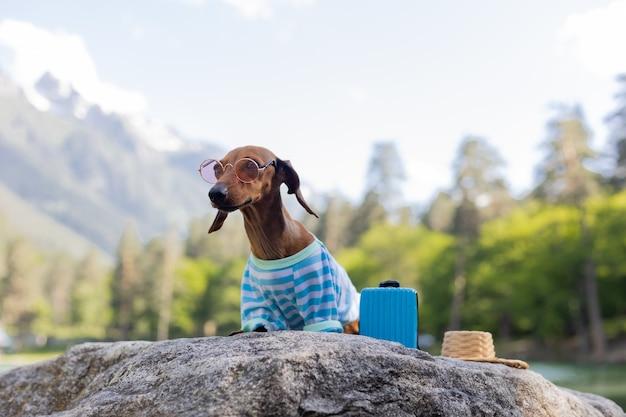 Милая собака такса в поездке. такса в солнечных очках, соломенной шляпе и летней одежде сидит у воды с чемоданом на берегу моря. отдых с домашними животными. фото высокого качества