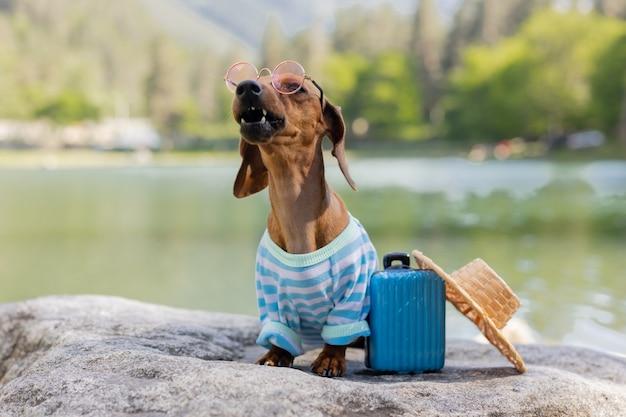 旅行中のかわいいダックスフント犬サングラスをかけたダックスフント犬麦わら帽子と夏服