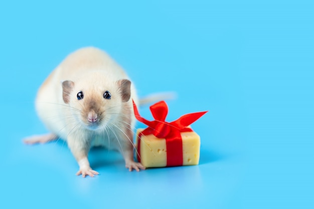 Cute decorative rat with cheese gift and red bow on a blue background
