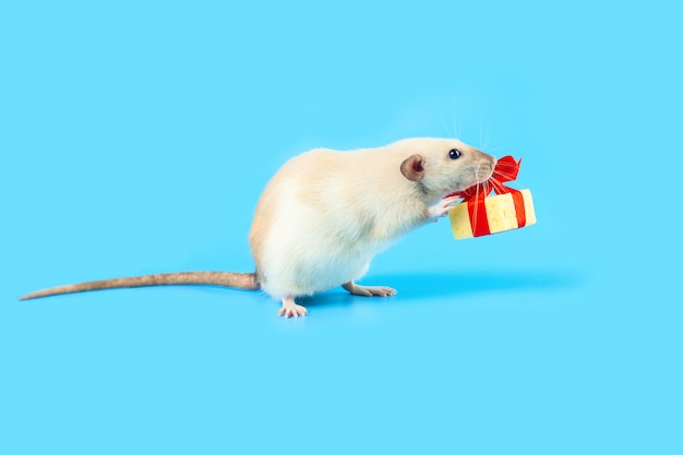 Cute decorative rat with cheese gift and red bow on a blue