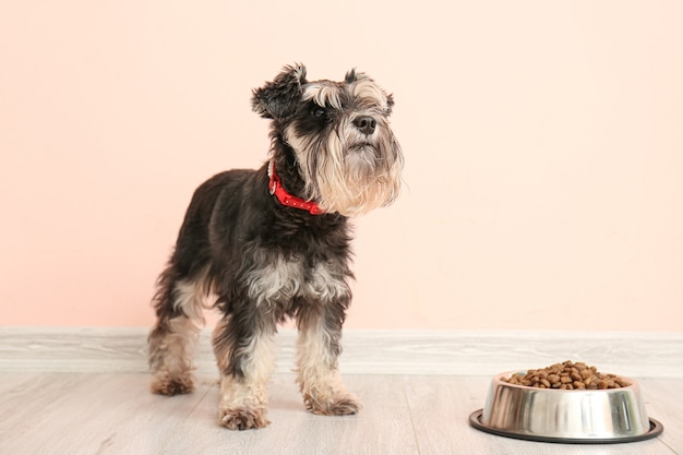Милая собака и миска с едой возле цветной стены