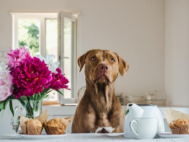 귀여운 강아지와 꽃