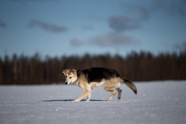 冬のフィールドで自然の散歩でかわいい犬。