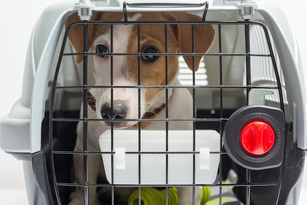 Cute dog in carrier
