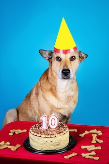Милая собака празднует день рождения от blue baclground