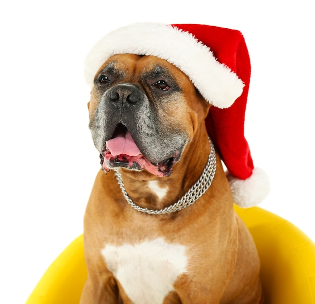 Cute dog in christmas cap, sitting in yellow armchair isolated on white surface