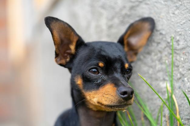 Cute dog close up of a head shot