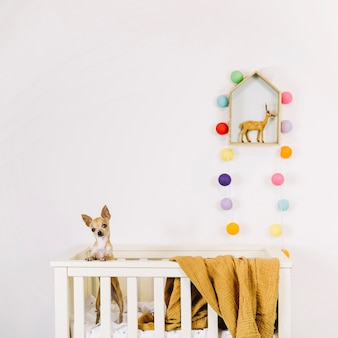 Cute dog in cradle