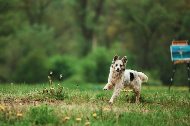 숲 근처 낮에 산책을 즐기는 귀여운 강아지. 배경에서 이젤에 페인트