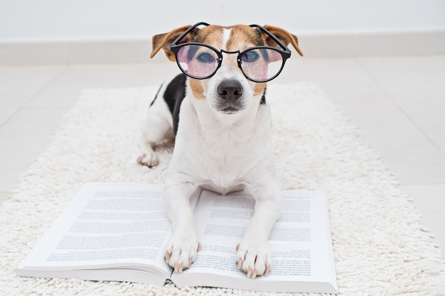 Cute dog in eyeglasses with book