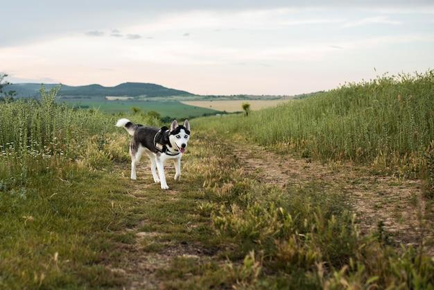 자연에서 재미 귀여운 강아지