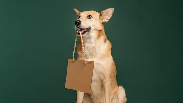 Милая собака держит пустой знамя Premium Фотографии