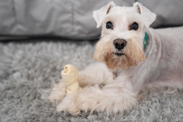 Cute dog holding toy
