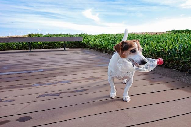 かわいい犬は口の中でペットボトルを保持します