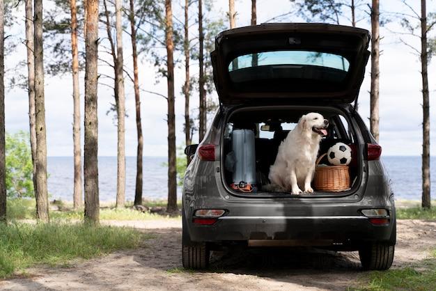 Милая собака в багажнике автомобиля