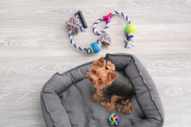 自宅のペットのベッドでかわいい犬