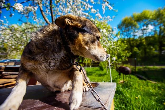 Милая собака в саду