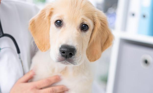 獣医のキャビネットのかわいい犬