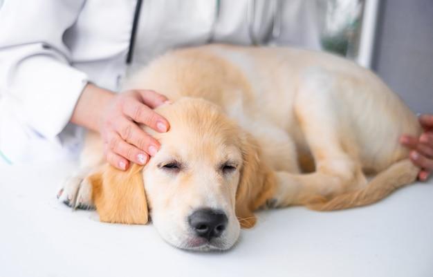 獣医クリニックのかわいい犬
