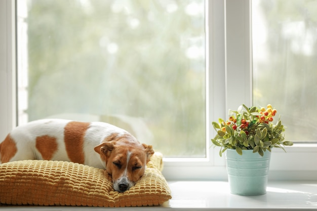 Cute dog is sleeping on the window and waiting for the owner.