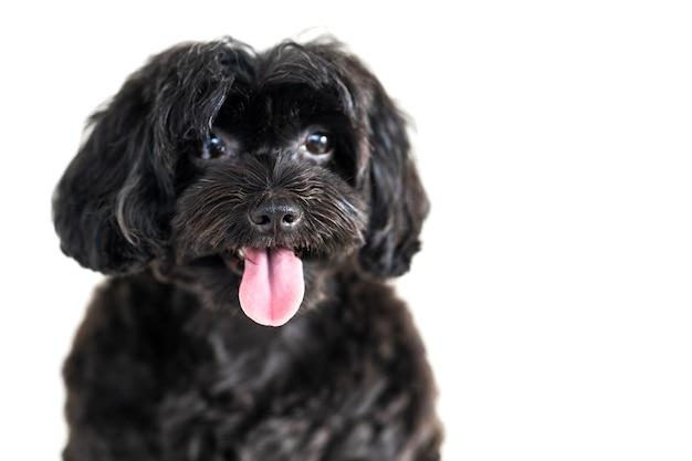 흰색 배경에 고립 된 귀여운 강아지