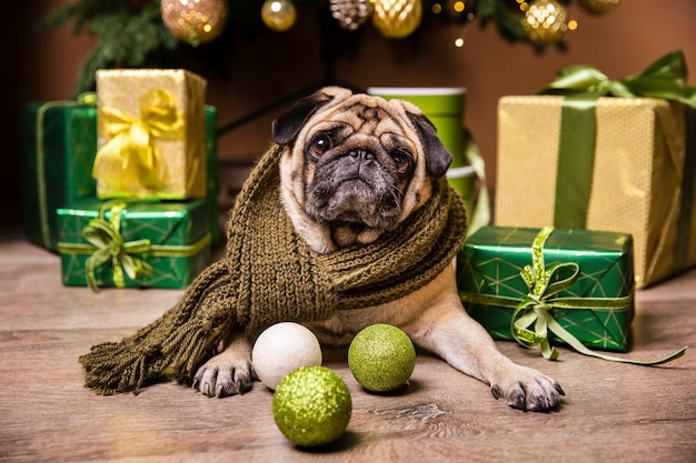 Cute dog laid in front of gifts for christmas