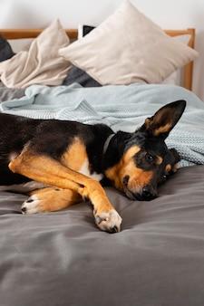 Милая собака, лежа на кровати