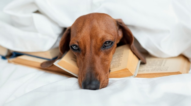 Милая собака, лежа на книгах