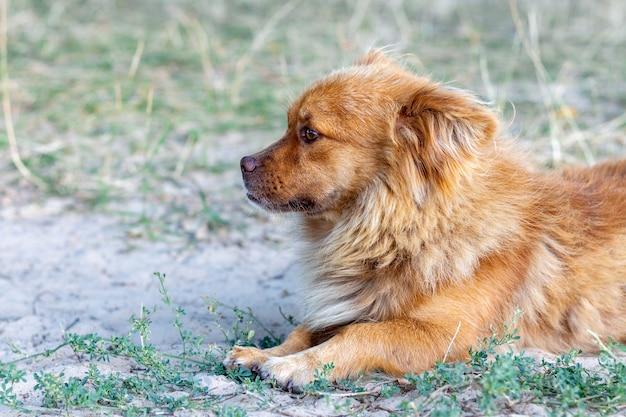 Милая собака лежит на траве