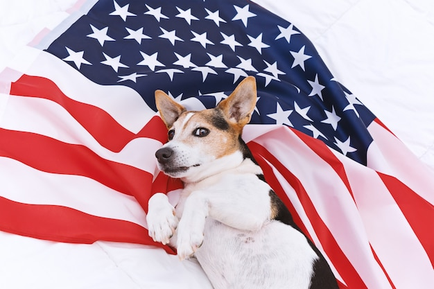 Cute dog lies on usa flag and looks at camera. american flag day celebration