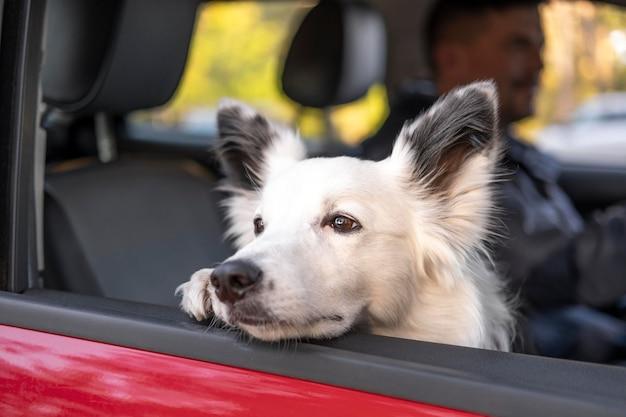 Милая собака смотрит в окно