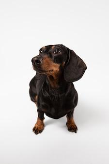 스튜디오에서 찾는 귀여운 강아지
