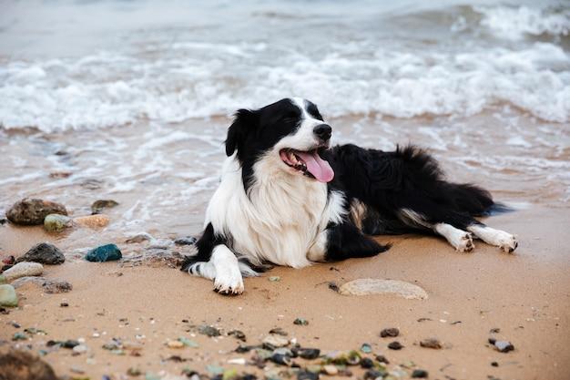 ビーチで横になって休んでいるかわいい犬