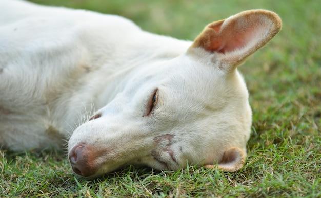 芝生の上に横たわっているかわいい犬