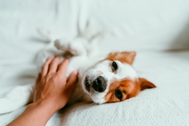 ソファーで横になっているとリラックスできるかわいい犬
