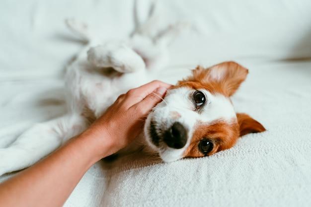 Милая собака лежит на диване и расслабляется