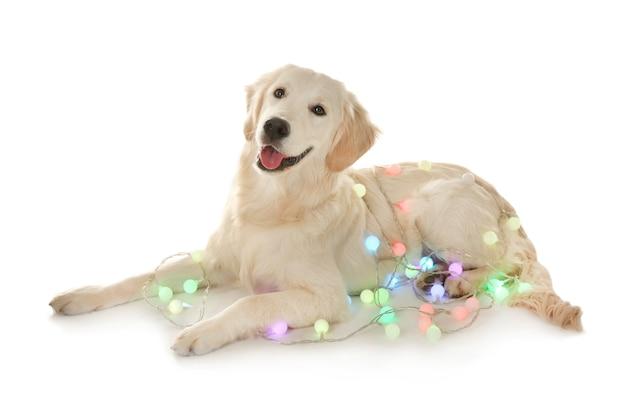 クリスマスライトの背景と横になっているかわいい犬