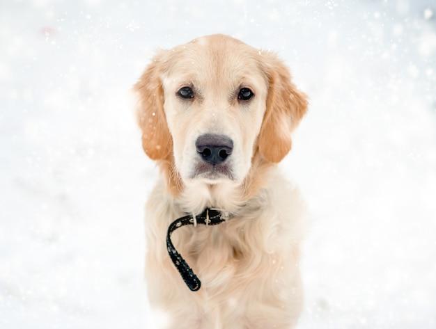 Симпатичная морда собаки с красивыми умными глазами в снежинках
