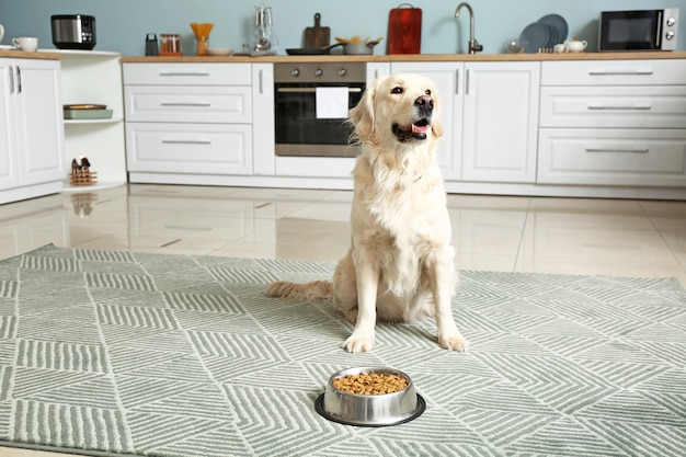 Cute dog near bowl with food in kitchen
