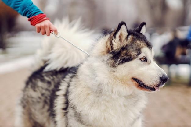Милая собака на поводке. собаки на прогулке. зимний день